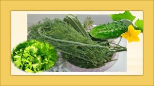 улучшаем настроение зеленью